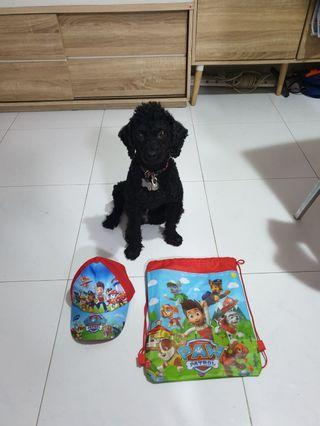 Paw patrol Draw sling bag & Hat (DOG NOT INCLUDED)