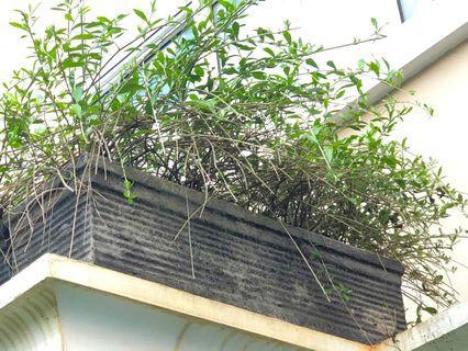 Pot with hanging plants (76x25cm)