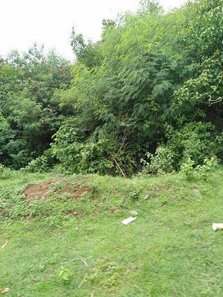 Bulacan Property for Sale (6 hectares)
