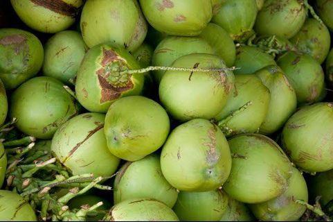Agen kelapa muda (1000 pcs)