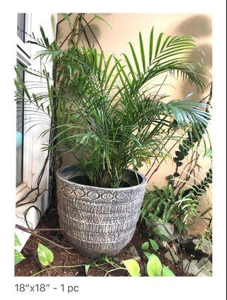 Pot with palm tree