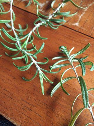🚚 Fresh cut organic Rosemary