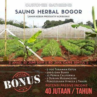 Lahan Pertanian Produktif Saung Herbal @ Jasinga
