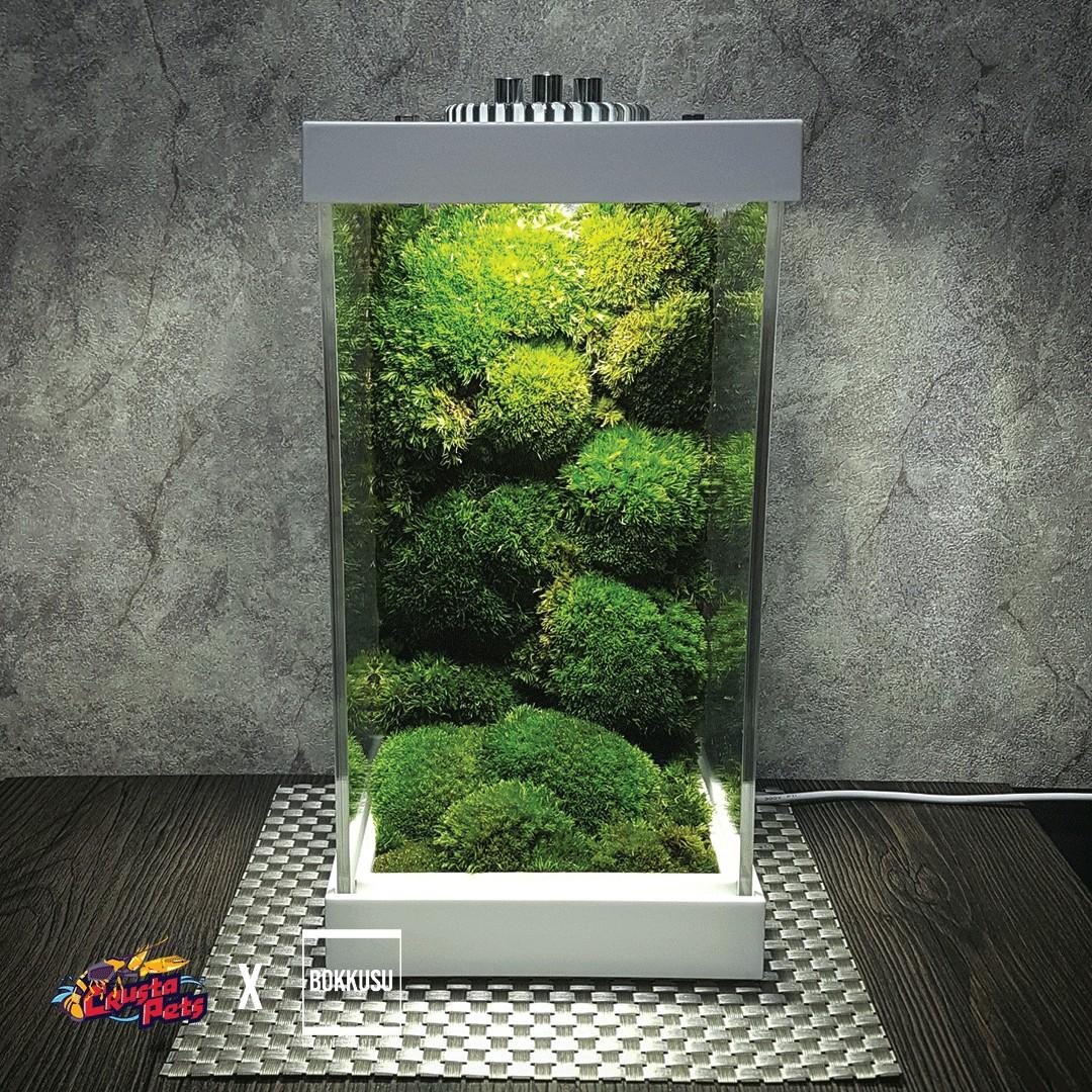 Live Moss Wall Scape ボックス Bokkusu Urban Scape Kit Ichi テラリウム Usb Terrarium Kit Gardening Plants On Carousell