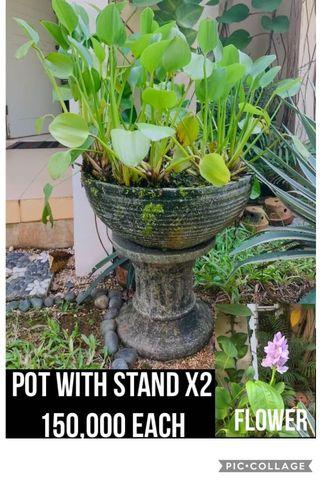 Pot & Stand with water plants