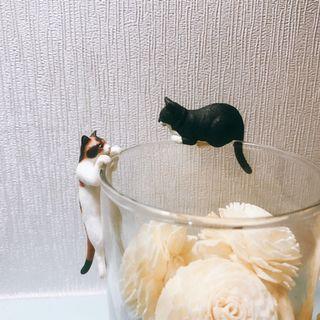 貓貓杯緣子
