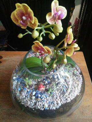 Orchid mix succulents big vase pot