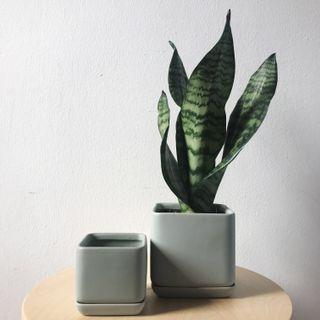 Nordic Teal Ceramic Planter Plant Pot