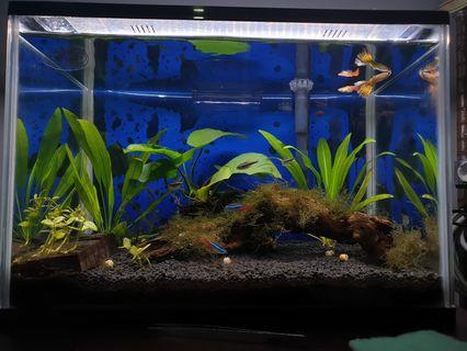 🚚 Fish Tank With wooden cupboard stand