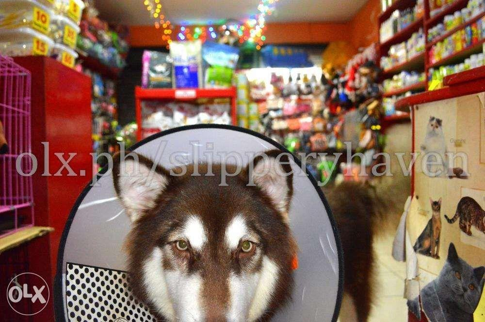 Pet Supplies Accessory for Siberian Husky Alaskan Malamute Rottweiler