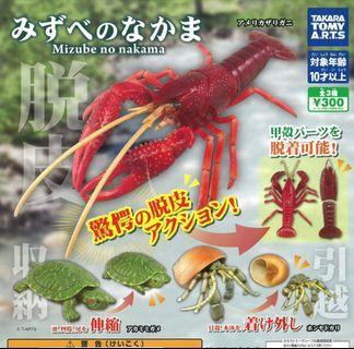 甲壳類生物 扭蛋 巴西龜 寄居蟹 小龍虾