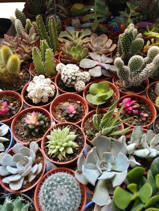 Succulent indoor plant many to choose