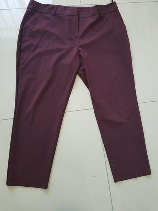 Plus size Dorothy Perkins Maroon Pants UK18