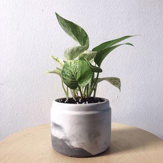 Minimalist Nordic Concrete Planter Plant Pot