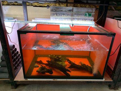 """3ft by 2.5ft by 22"""" 12mm glass tanks with overhead set up(base tray made of glass)"""