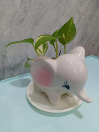 Cute porcelain/ ceramic small elephant pot with money plant!