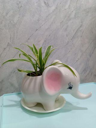 Cute porcelain/ ceramic big elephant pot spider plant!