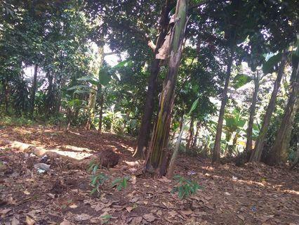 Tanah kebun 1000m di rumpin bogor , isi pohon duren ,duku ,dll