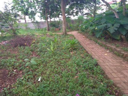Tanah kebun 200m di cibentang ciseeng bogor, deket  jalan raya