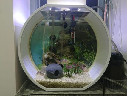 圓形魚缸連6條健康鼠魚設備