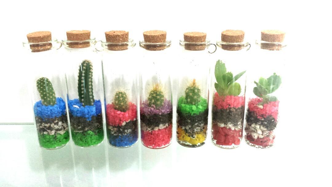 Live miniature cactus succulent no mess in a bottle 7cm height teacher's day children's day birthday events door gift garden mini flower test tube baby plant