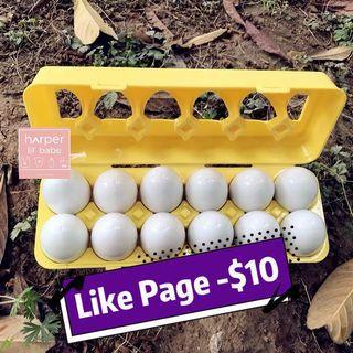 ‼️Like Page再減$10‼️ 雞蛋 連雞蛋盒 學顏色 配對 💫 手眼協調 PN K 面試必備
