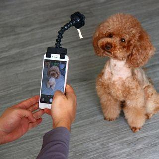 🚚 Dog Selfie Stick: Pre-order 9 days delivery
