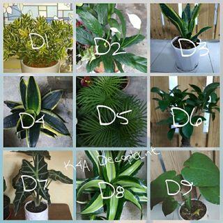 Pokok/ Plant