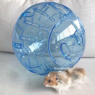 27cm Syrian Hamster Running Ball in Clear Blue