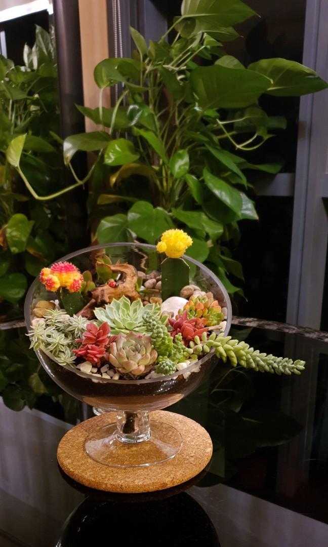Handcrafted Bouquet of Succulents tabletop Garden