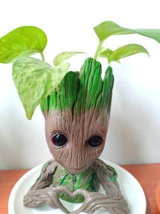I am Groot money plant