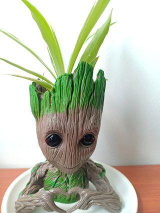 Groot pot spider plant