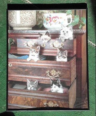 Cute Cat Picture - Croydon