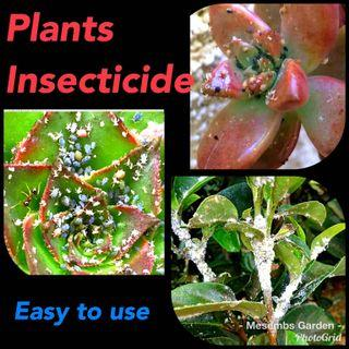 Plants insecticide