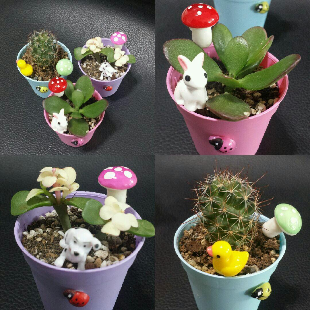 Mini Cactus 5.5cm pot Succulent colorful pot Teacher's Day Children's Day Birthday gift plant garden can customise mini dog duck rabbit