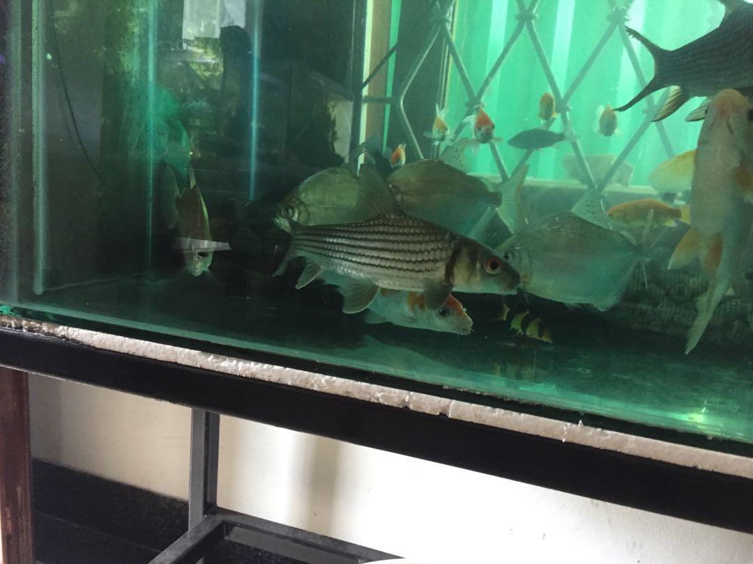 Aquarium & Ikan #mauovo