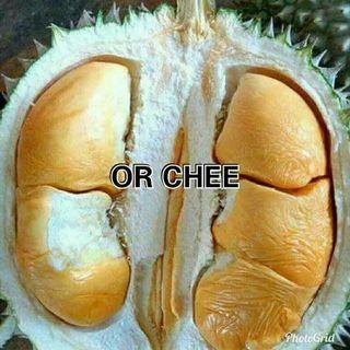 Bibit durian oche