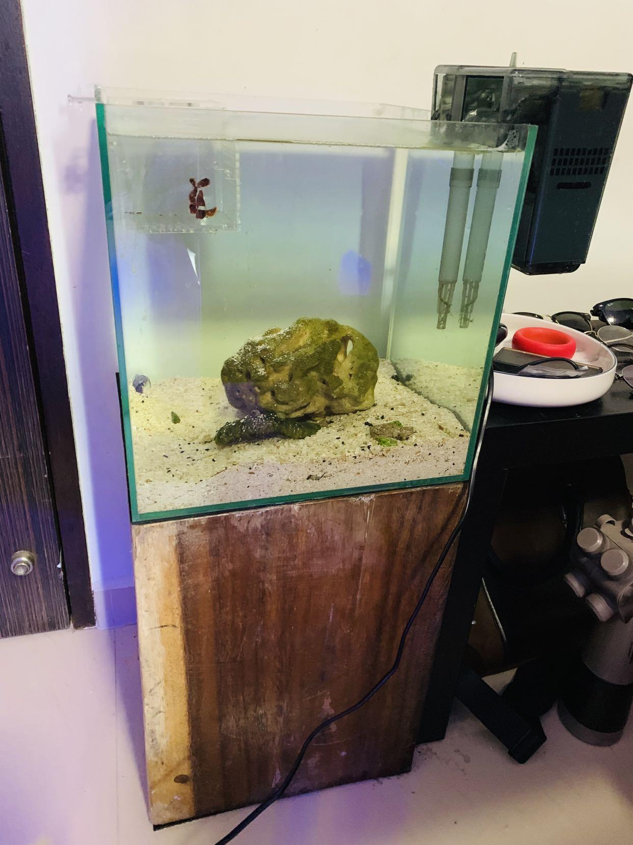 Fish Tank With Wooden Block Stand Marine Pet Supplies For Fish