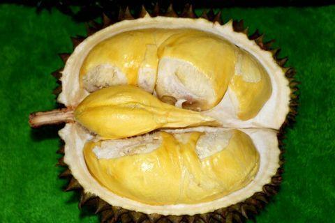 Bibit durian matahari