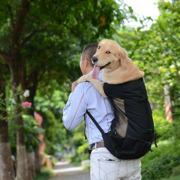 Dog pet carrier bag in grey