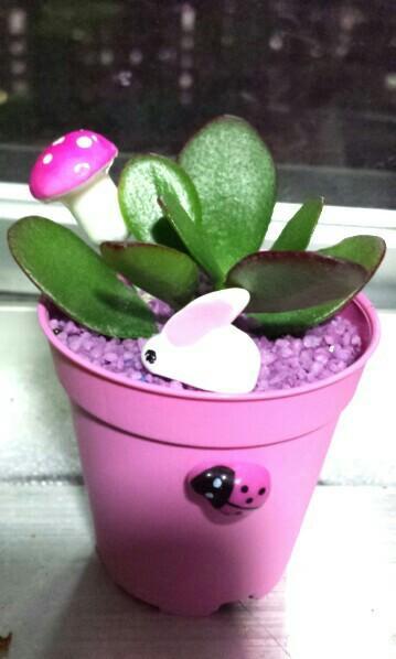 Fat Cactus succulent teacher's day gift birthday plant garden