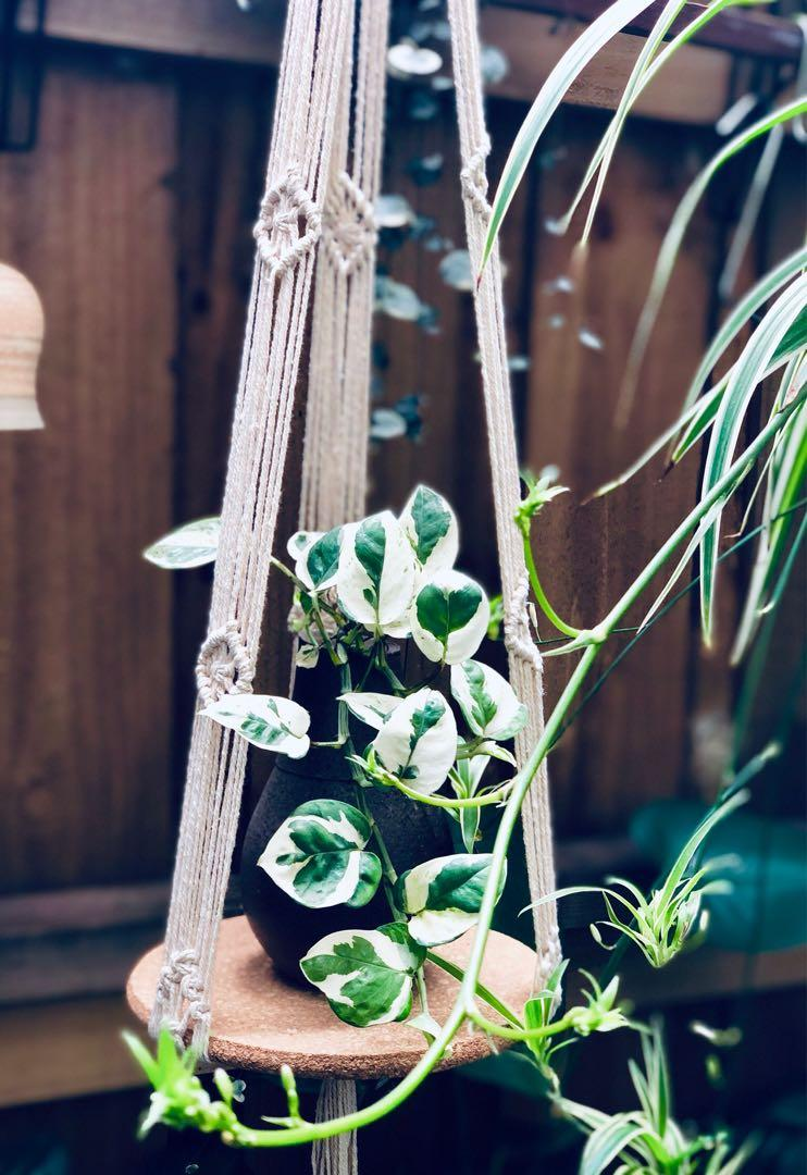 Macrame Hanger with Cord Board/ Cotton Cord/ Plant Hanger/ Plant / Boho Decor