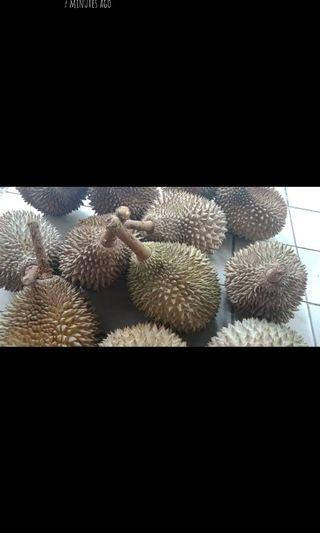 ⚠️ Promotion Musang King rm32 per kg ⚠️
