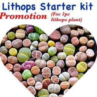 Lithops Starter kit (free 1 lithops plant)