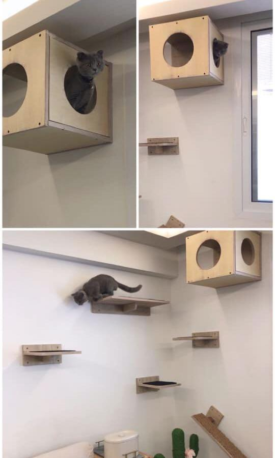Cat Shelves / Cat Super Highway