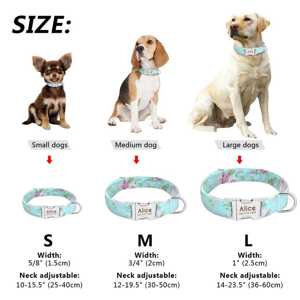 Dog collar with engraving