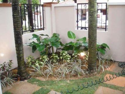 Garden Landscape / Garden Maintenance