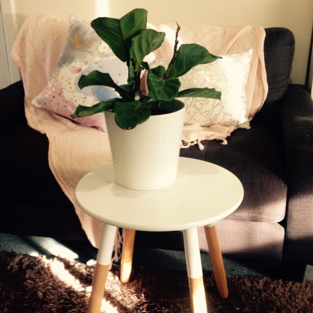 Two seater couch (new) with shag rug and coffee table