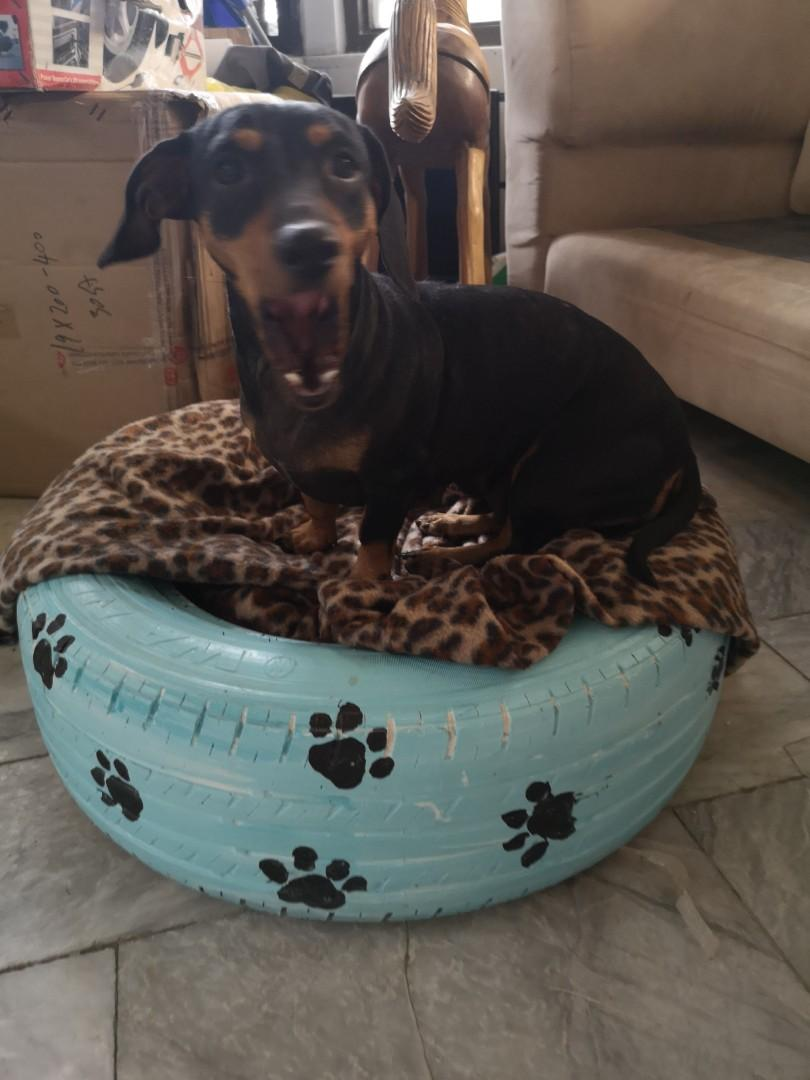 Dog Bed Recycle Dog Tire Free Blanket Pet Cat Accessories Gift Pets Supplies Pet Accessories On Carousell