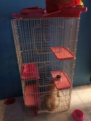 Kandang kucing atau kelinci